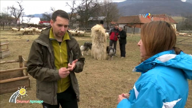 CIOBANESCUL ROMANESC CARPATIN- O SOLUTIE EFICIENTA DE PAZA A TURMELOR DE ANIMALE